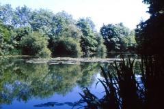 Claxton Brick Ponds