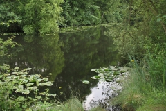 Claxton_Pond_3