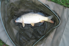 Laybourne_2lb_Common