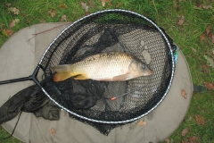 Laybourne_3lb12oz_Common