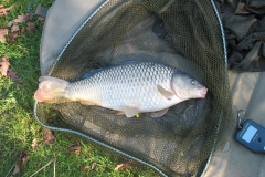 Laybourne_4lb_Common