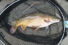 Laybourne_4lb_Mirror