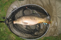Laybourne_6lb_Mirror