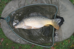 Laybourne_7lb_Common