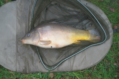 Laybourne_9lb11oz_Mirror