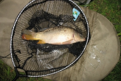 Laybourne_Common_Carp_3lb4oz