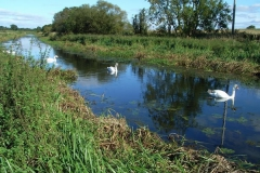 Pocklington_Canal_Near_Hagg_Bridge_Michael_01