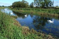 Pocklington_Canal_Near_Hagg_Bridge_Michael_01