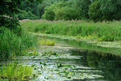 Pocklington_Canal_Near_Hagg_Bridge_Phil_01