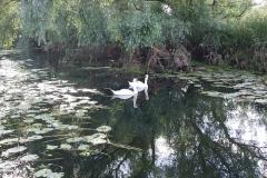Pocklington_canal_web