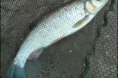 Rawcliffe_Lake_Chub_Cabbo_01