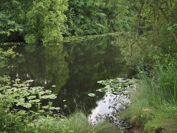 YDAA - Claxton Pond