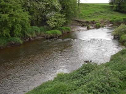 YDAA - River Nidd - Moor Monkton
